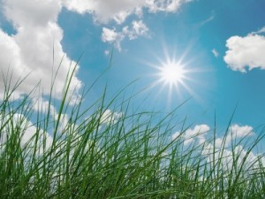 Protect yourself naturally from the sun's harmful rays